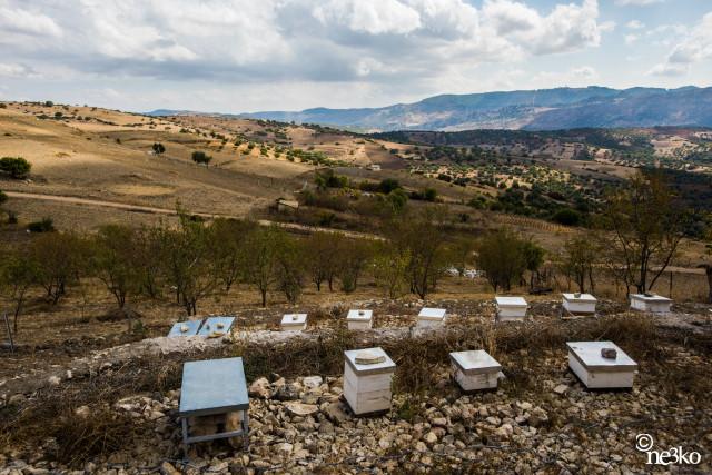 GREEN WISH – Quatre questions à la Fondation Melvita