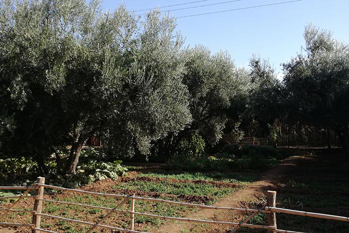 La ferme berbère – Marrakech