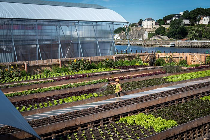 GREEN WISH – L'agriculture urbaine : initiatives et perspectives