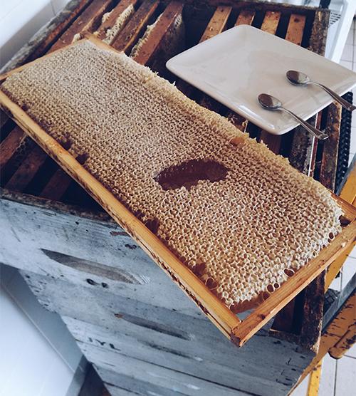 Ode aux abeilles !